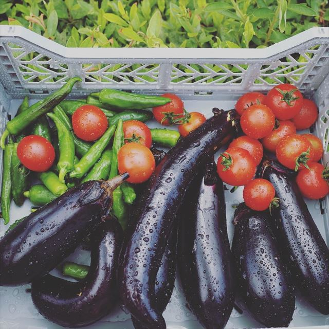 旬な夏野菜の画像1