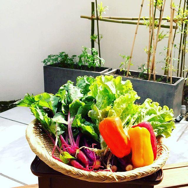 旬な夏野菜の画像2