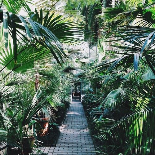 オーガニック植物が並んだ画像