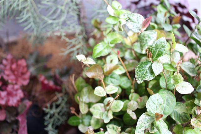 オーガニック植物の画像